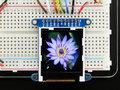 Adafruit-1.44-Color-TFT-LCD-Display-with-MicroSD-Card--Adafruit-2088